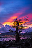 Firey sunset with mangrove tree Stock Images