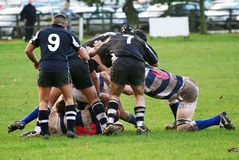 Firm grip in the scrum. Teamwork on the English Rugby field royalty free stock photo