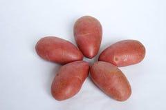 Firma och fondant för potatis röd arkivbild