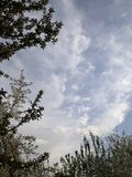 Firmament sky. Background clouds and twigs Royalty Free Stock Photo