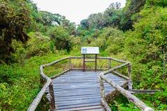 Firmi il nessun 5 in Ang Ka Luang Nature Trail fotografia stock libera da diritti