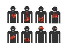 Firmi l'essere umano con cuore, il fegato, gastrico, intestinale, estratto di affezione polmonare su fondo bianco Immagini Stock Libere da Diritti