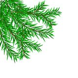 Firry branches. Background from fir-tree branches Royalty Free Stock Photography