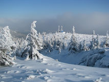 Firry timberline in the winter. Royalty Free Stock Images