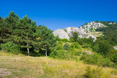Firs. Summer mountain landscape in Crimea, Ukraine Stock Photo
