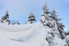 Firs covered with snow. Snowdrifts in the mountains in sunny day Royalty Free Stock Image