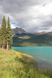 Firs at Emerald Lake Stock Image