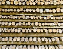 Firs logs piled up Stock Photos