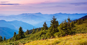 Firs in the mountains Royalty Free Stock Photography