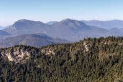 Firs in the mountains on a winter day. Winter landscape. Panoramic view of the mountains in the distance and ice-covered spruce at sunrise in the winter Greece Royalty Free Stock Photo