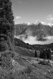 Firs over clouds in mountains. Spruces and road over clouds and fog after storm in mountains in sunrise and sun rays at alps, Tien Shan, Almaty Big Lake Stock Photos