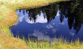 Firs reflection in the calm, blue water of a mountain lake. Firs and sky reflection in the calm, blue water of a mountain lake Royalty Free Stock Images