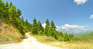Firs road Royalty Free Stock Photo
