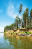Firs and sea. Russia royalty free stock photos