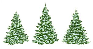 Firs in the snow. A set of Christmas trees with snow. Isolated. Firs. set of beautiful Christmas trees in the snow. Christmas. Winter. Nature in details Stock Photography