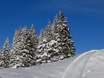 Firs and ski slope Stock Image