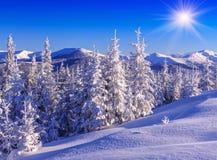 Firs, snow, mountains Stock Photos