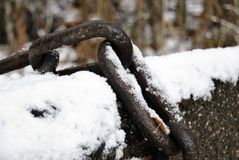 Firs snow rained over rusted chain Royalty Free Stock Photo
