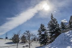 Snow and firs. Firs in Snow Under Cloudy Sky Royalty Free Stock Photo