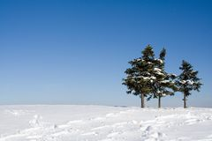 Firs on top of a hill. Three firs on top of a hill Stock Photos
