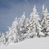 Firs  under snow Stock Photos