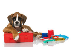 First aid. Puppy with first aid kit Royalty Free Stock Images