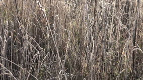 First autumn frost on meadow grass in autumn sunlight stock video footage