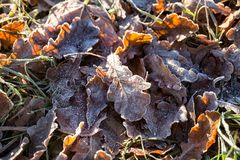 First frosts Royalty Free Stock Images