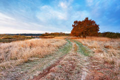 First autumn frosts in oak wood. Road in the meadow near the riv Stock Photos