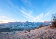 First autumn frosts and sunrise in mountain Stock Photography