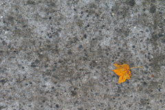 First autumn leaf Stock Images