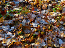 The First Autumn Night Frosts Royalty Free Stock Images
