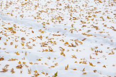 First autumn snow Stock Photography