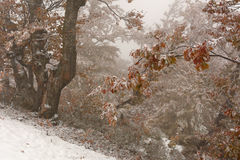 First autumn snow Royalty Free Stock Images