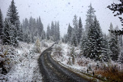 First autumn snowfall Royalty Free Stock Images