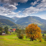 First autumn yellow trees in the village Stock Images