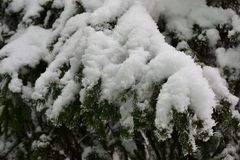 The first big snow at my home royalty free stock images