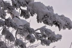 The first snow at my home royalty free stock images