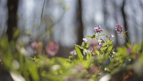First blooming flowers in a spring wild forest. Fresh grass and flowers in spring. Blooming flowers in wild nature. Blooming flowers in wild nature. First stock video footage