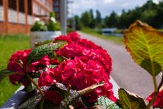 First blooming of flowers in the summer royalty free stock image