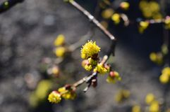 First blossom on a tree Royalty Free Stock Photos