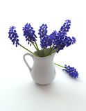 First blue Springs flowers Royalty Free Stock Photo