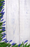First blue springs flowers Muscari border on wooden table background Stock Photography