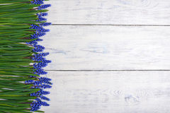 First blue springs flowers Muscari border on wooden table background Royalty Free Stock Photos