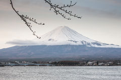 First Cherry Blossom with Mt Fuji Royalty Free Stock Photos
