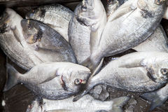 First class fishermans catch on market stall Royalty Free Stock Images