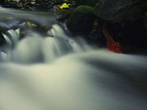 The first colorful leaf from maple tree on basalt mossy stones in blurred water of mountain rapids stream. Stock Image