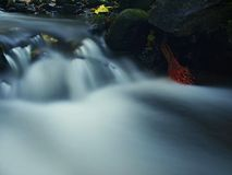 The first colorful leaf from maple tree on basalt mossy stones in blurred water of mountain stream. Royalty Free Stock Photo