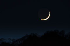 First crescent moon. In the wood Stock Photography