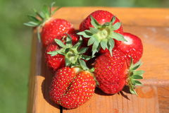 First crop of ripe strawberry on the sun. The first berries of strawberry on a wooden box stock photos
